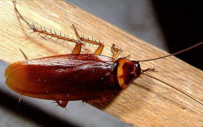 Тараканы вернулись! (ФОТО), Интернет-портал Наш Череповец